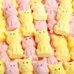 Aseli Süße Kätzchen 300g