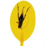 Don't Cry Eat It! Insektenlutscher mit Grille Banane-Creme