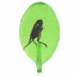 Don't Cry Eat It! Insektenlutscher mit Grille Jalapeno